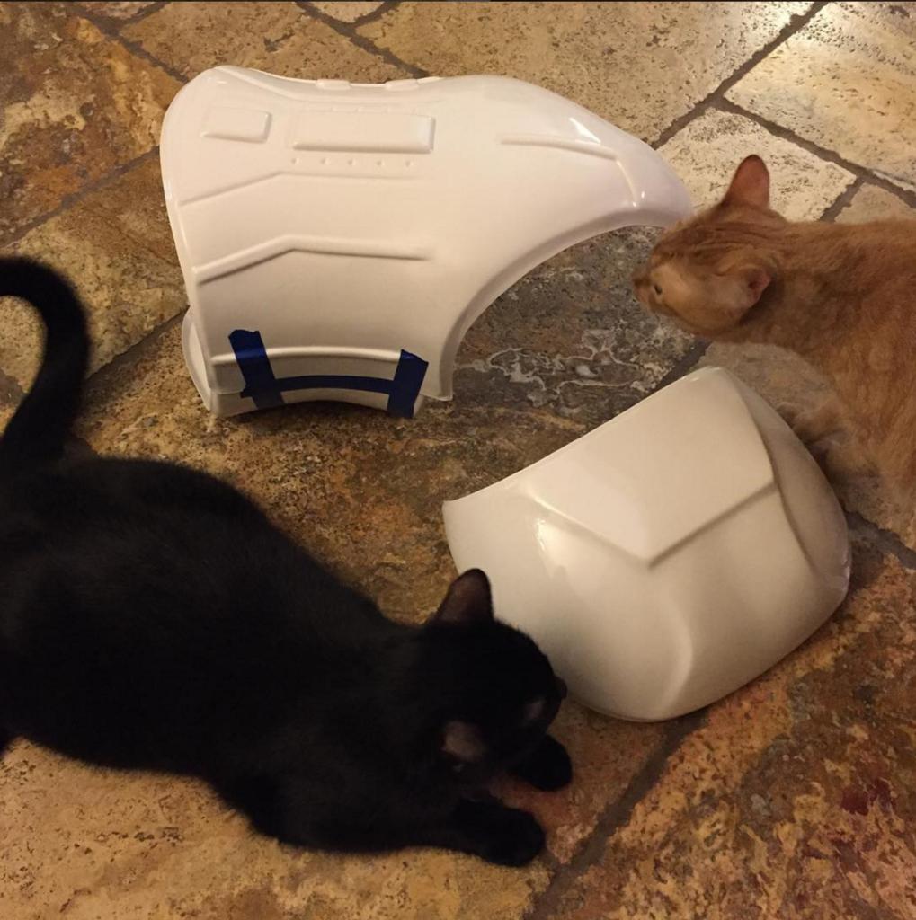 cat-armor